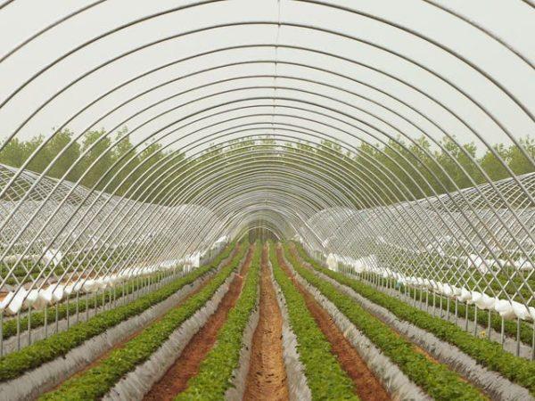 Choosing the Right Farm
